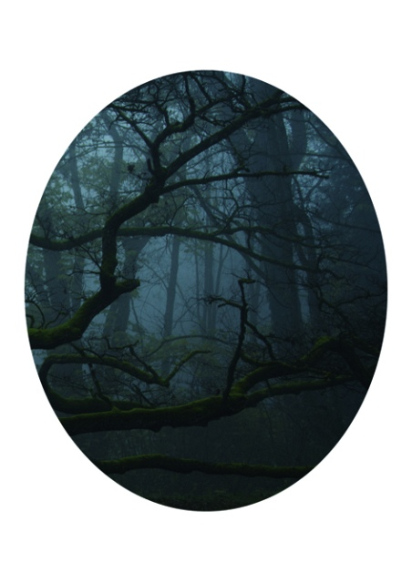 Karen Irmer, Wood (Edition: Mirrors), 2016, Fotografie auf Aludibond, 19 x 24 cm