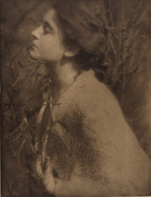 Edward Steichen, Lilic Buds, 1906, Heliogravüre,