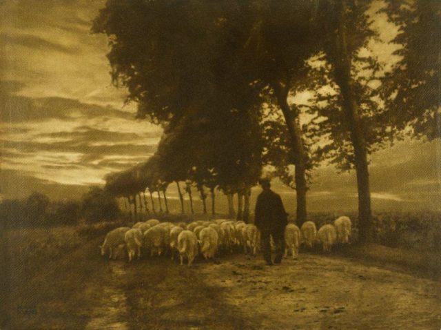 Heinrich Kühn, Heimtrieb der Schafherde, um 1900, Gummidruck,
