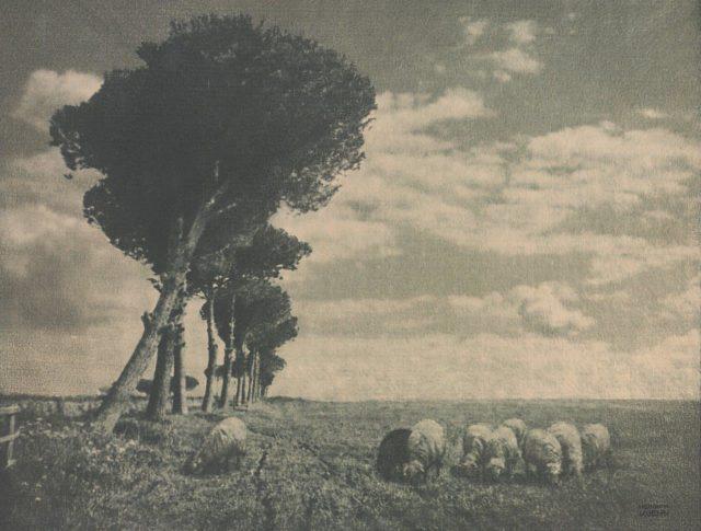 Heinrich Kühn, Schafherde in der Campagna, um 1899, Gummidruck,